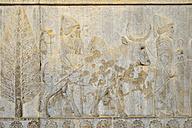 Iran, Persia, Persepolis, delegation bas-relief on the Apadana Palace - ES000598