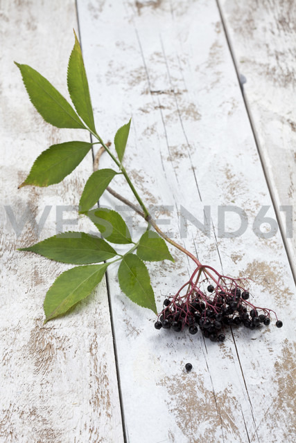 Elderberries (Sambucus) with leaves on white wooden table, studio shot - CSF020260