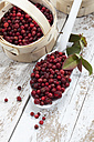 Cranberries (Vaccinium vitis-idaea) in a little basket and on a spoon, studio shot - CSF020275