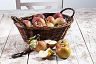 Organic apples (Malus), basket and a knife on white wooden table, studio shot - CSF020300