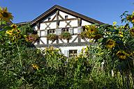 Germany, Bavaria, Upper Bavaria, , Anlauter valley, Enkering, Schellenburg, a herd of sheep in morning light - LB000394
