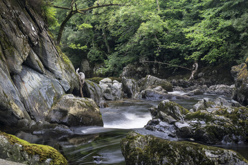 Great Britian, Wales, Betws-y-Coed, canyon Fairy Glen at Snowdonia-National Park - ELF000578