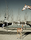 Wild animals in the city, Composite - TLF000718