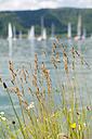 Germany, Baden-Wurttenberg, Sipplingen, Boats in front of Bodanruck on  Lake Constance - SH000877
