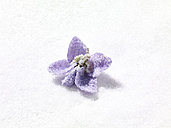 Candied violet on sugar, close-up - SRSF000294