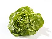 Lettuce (Lactuca sativa), studio shot - SRSF000279