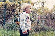 Germany, Bonn, Baby boy exploring garden - MFF000617