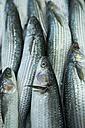 Spain, Balearic Islands, Majorca, Palma, Fish market, sardines - HL000283
