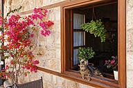 Turkey, Antalya, Cat lying in open window - SIEF004643