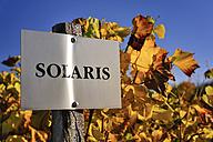 Germany, Saxony, Radebeul, Solaris varietal sign in front of grapevine - BTF000316