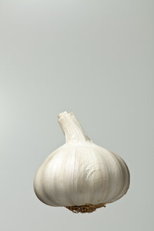 Garlic bulb, studio shot - WSF000029