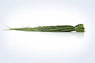 Bunch of chives - STKF000573
