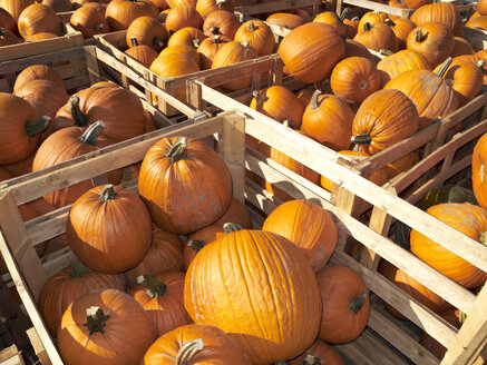 Germany, Pumpkins in crates - STKF000647