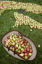 Germany, Schleswig-Holstein, Apples in meadow - TKF000194
