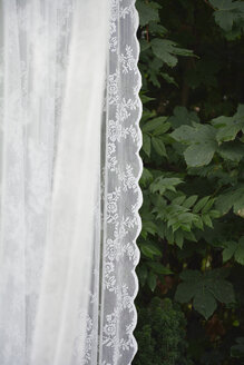 Curtain in front of green bushes - AXF000523
