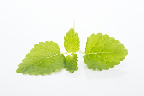 Balm leaves - MAEF007335