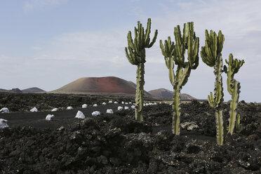Spain, Lanzarote, Volcanos - JATF000463