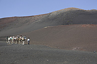 Spain, Lanzarote, Timanfaya National Park, Tourist caravan - JAT000456