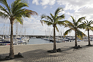 Spain, Lanzarote, Puerto Calero, Marina with  boats and palms - JATF000452