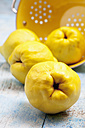 Four quinces (Cydonia oblonga) and a yellow colander on wooden table - CSF020333