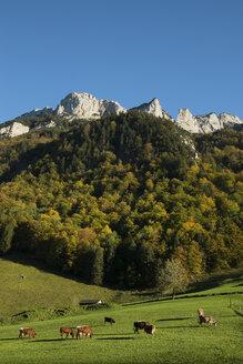 Switzerland, Canton Appenzell Innerrhoden, Appenzell Alps, cow pasture - ELF000637