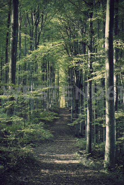 Germany, Baden-Wuerttemberg, Beech Forest - ELF000650
