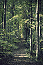 Germany, Baden-Wuerttemberg, Beech Forest - ELF000650