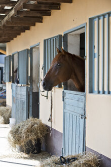 Germany, NRW, Korchenbroich, Horse in stable - CLPF000006