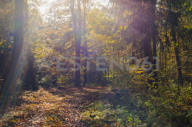 Germany, view at autumn wood - MJF000429