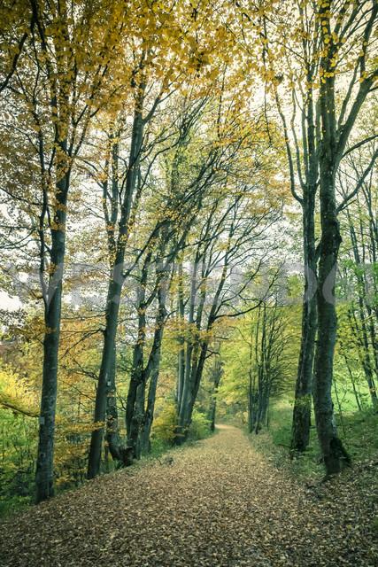 Germany, Baden Wuerttemberg, Zollernalbkreis, forest path in autumn - ELF000662 - Markus Keller/Westend61