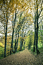 Germany, Baden Wuerttemberg, Zollernalbkreis, forest path in autumn - ELF000662