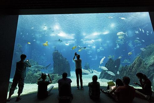Portugal, Lisbon, Oceanario de Lisboa, visitors in front of aquarium - BI000147