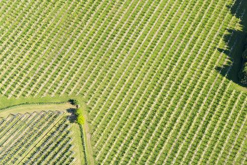 Germany, Baden-Wurttemberg, Friedrichshafen, Aerial view of fruit plantation - SH001162