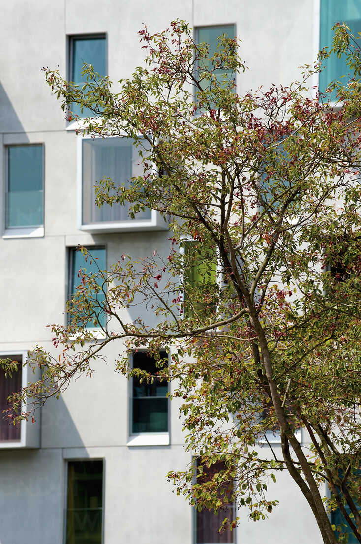Germany, North Rhine-Westphalia, Cologne, part of facade of multi-family house at Rheinau harbour - VI000001 - visual2020vision/Westend61