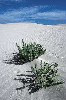 Spain, Fuerteventura, Corralejo, Parque Natural de Corralejo, plants at sand dune - VI000169