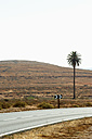Spain, Fuerteventura, landscape with road and palm tree - VI000098