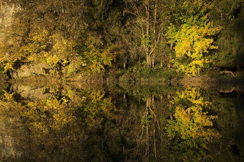 Germany, Baden Wuerttemberg, Upper Danube Nature Park, water reflection in autumn - ELF000673