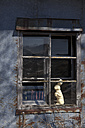 Easter Bunny in window of old building - MSF003149
