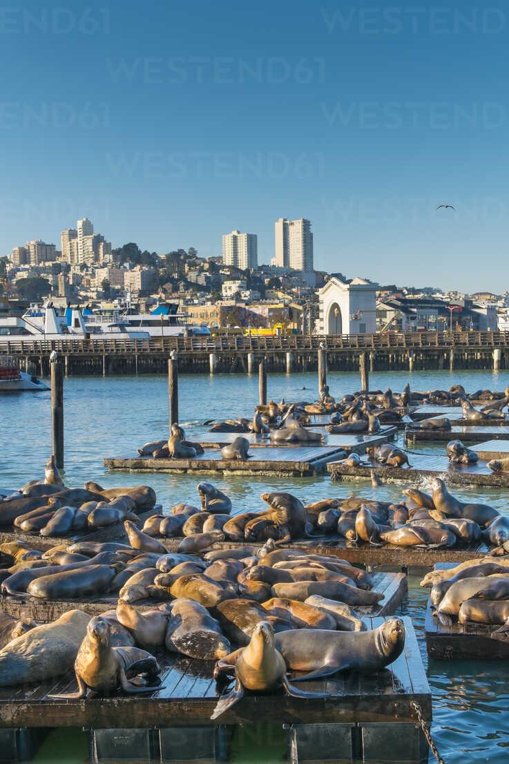 USA, California, San Francisco, sea lions lying on pier - ABAF001088 - André Babiak/Westend61