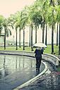 Brazil, Sao Paulo, Woman with umbrella walking in rain - AMC000025