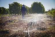 Australia, Carnarvon, Farmer installing irrigation system - MBE000966