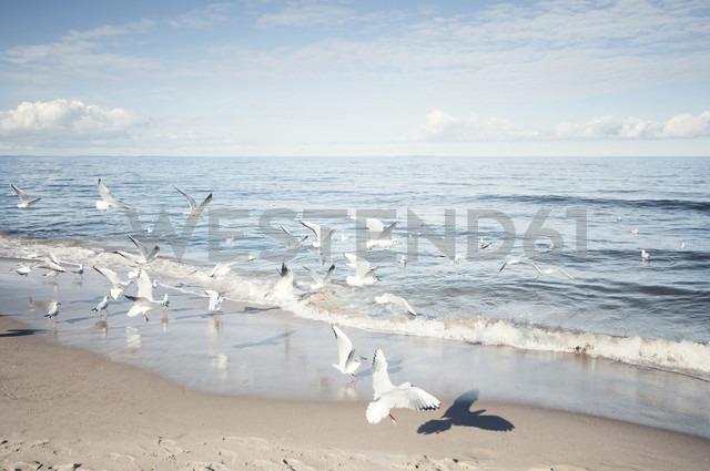 Germany, Mecklenburg-Western Pomerania, Usedom, seagulls on the beach - WAF000018 - wecand/Westend61