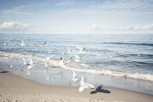 Germany, Mecklenburg-Western Pomerania, Usedom, seagulls on the beach - WAF000018