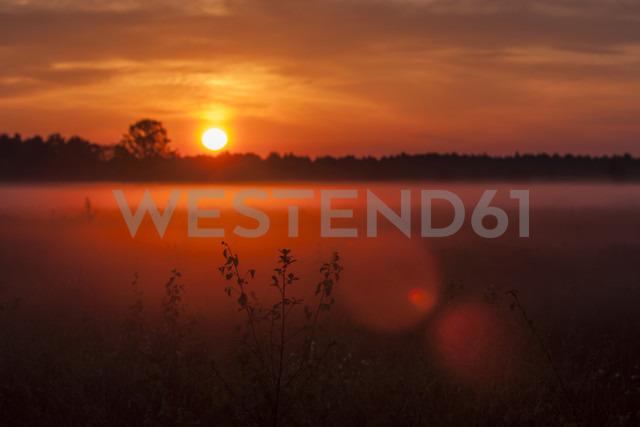 Germany, North Rhine-Westphalia, Recker Moor, Landscape at sunrise - PAF000103 - Andreas Pacek/Westend61