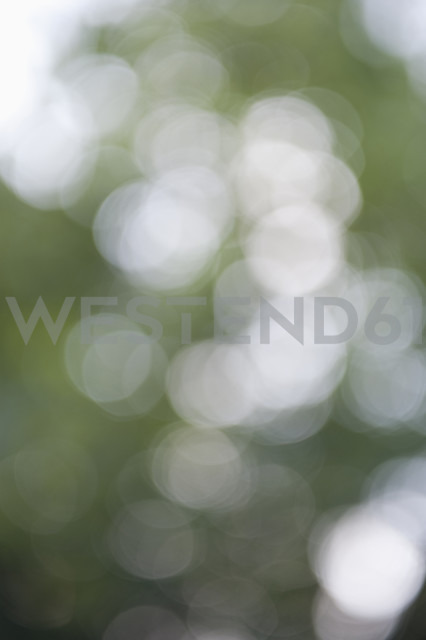Lens flares in front of green background - CRF002537