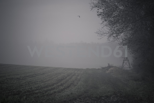 Germany, Baden-Wuerttemberg, Enzweihingen, fields landscape at haze - SBDF000372