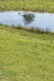 Sweden, Skanoer Med Falsterbo, water reflection of tree in a pond - VI000199