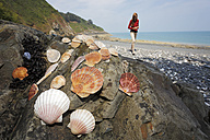 France, Bretagne, Beach of Pordic, Tourist collecting seashells - BIF000204