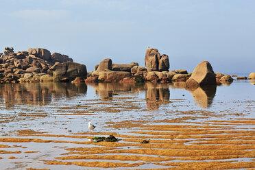 France, Bretagne, Tregastel, Granite coast - BIF000218