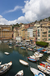 Italy, Liguria, Camogli, Boats in harbour - AMF001524